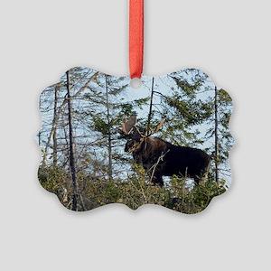 temp_12x20_car_magnet    6 Picture Ornament