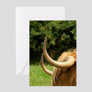 Highland cow. Greeting Card
