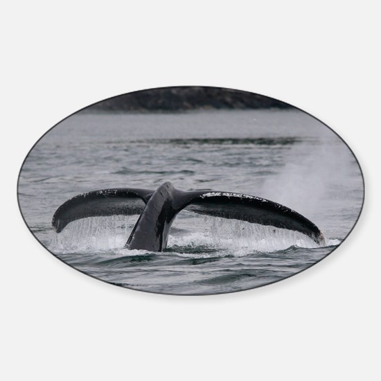 whale Sticker (Oval)