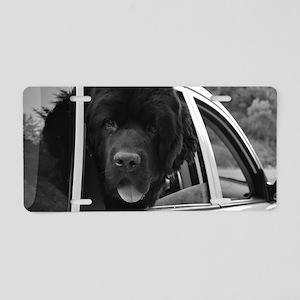 DSC_0046 Aluminum License Plate