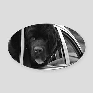 DSC_0046 Oval Car Magnet
