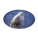 Snowy White Owl 20x12 Oval Wall Decal
