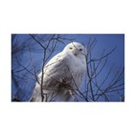 Snowy White Owl 35x21 Wall Decal