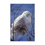 Snowy White Owl Mini Poster Print