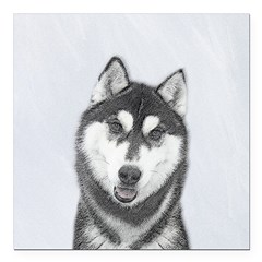 Siberian Husky (Black an Square Car Magnet 3