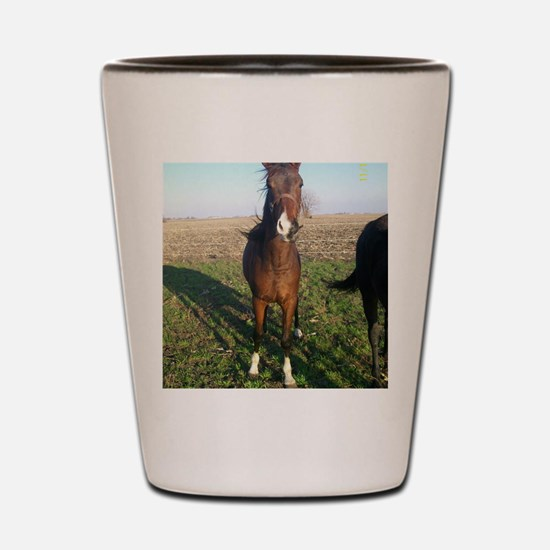 2yo colt Shot Glass