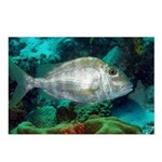 Porgy Postcards (Package of 8)