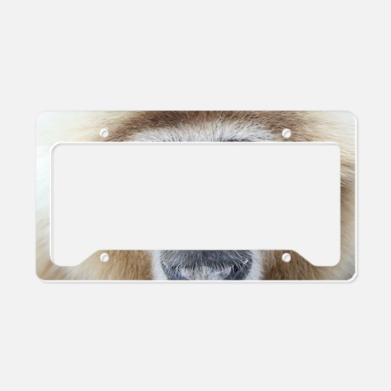 7%253A10%253A11%25202 License Plate Holder