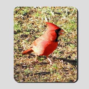 Cardinal small poster Mousepad