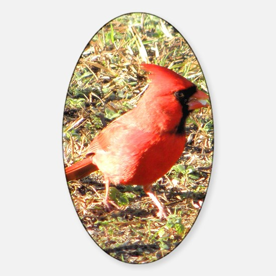 Cardinal iPad Sleeve Sticker (Oval)