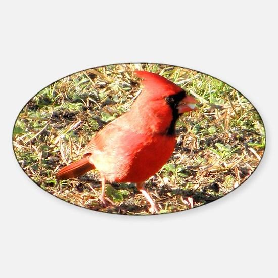 Cardinal Toiletry bag Sticker (Oval)