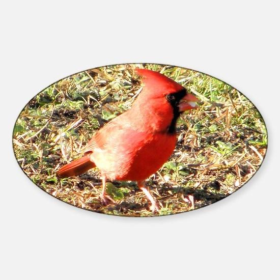Cardinal coin purse Sticker (Oval)
