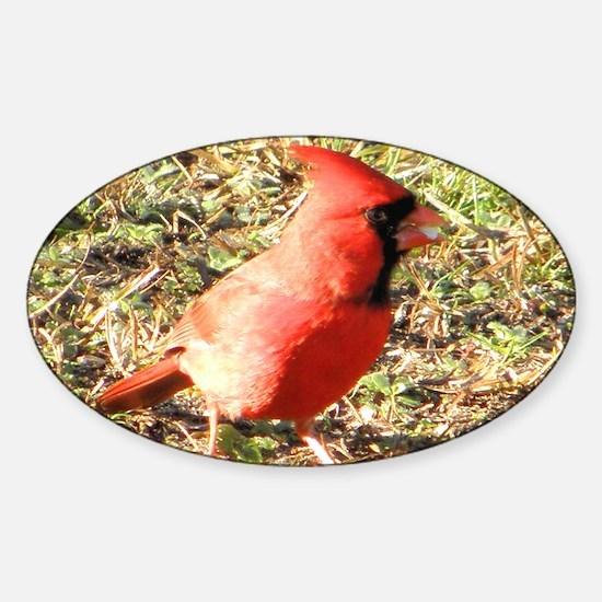 Male Cardinal clutch bag Sticker (Oval)