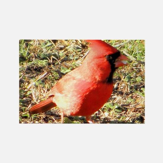 Cardinal mens wallet Rectangle Magnet