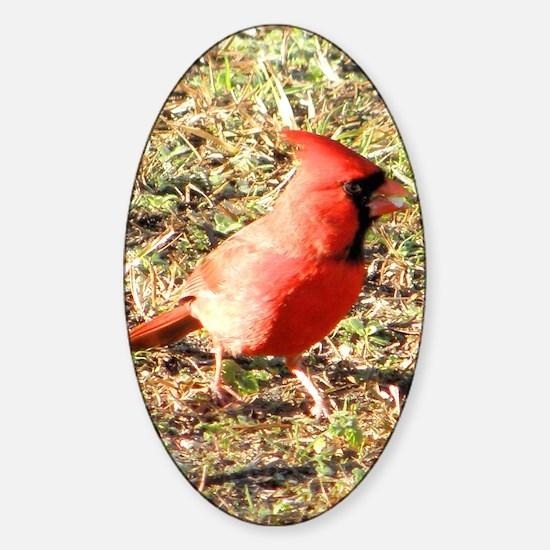 Cardinal greeting card Sticker (Oval)