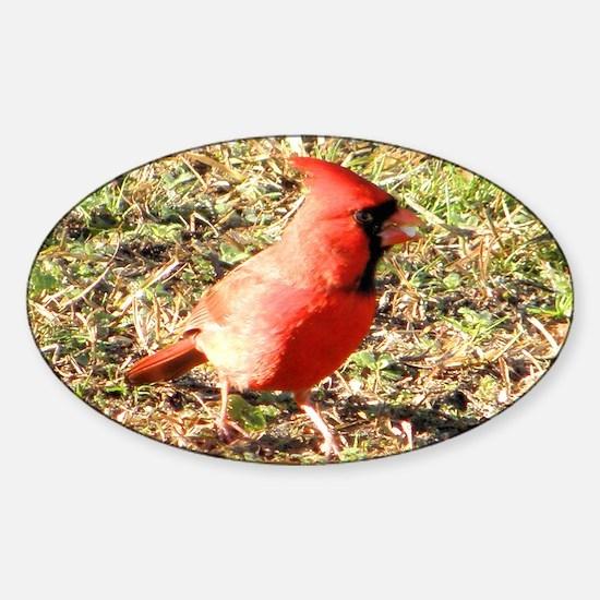 Cardinal Note Cards Sticker (Oval)