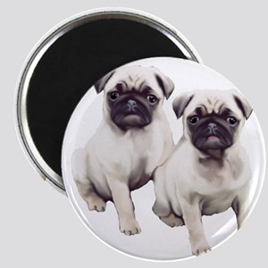 two pugs sitting Magnet