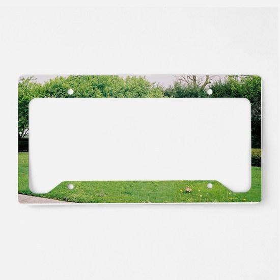 CalumetGraveyard License Plate Holder