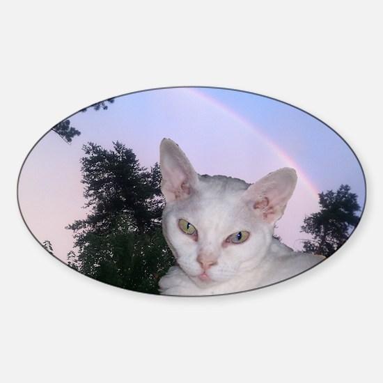 Cat-Calendar-Cover Sticker (Oval)