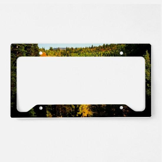 Pine tree Aspen canyon License Plate Holder