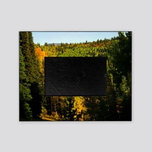 Pine tree Aspen canyon Picture Frame