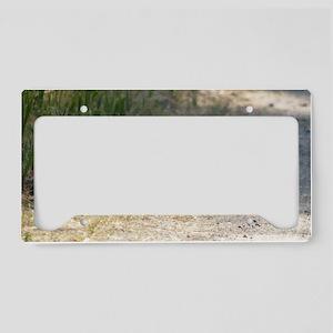 naptime14x6_print License Plate Holder