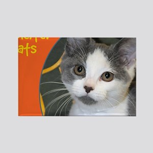 Shelter Cats Rectangle Magnet