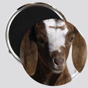 Cute kid goat Magnet