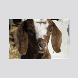 Cute kid goat Rectangle Magnet