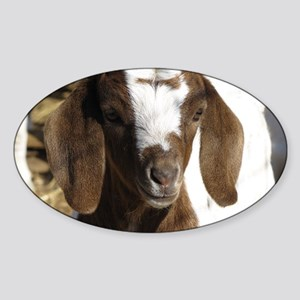 Cute kid goat Sticker (Oval)