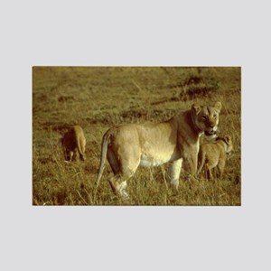african lion female with cubs Rectangle Magnet