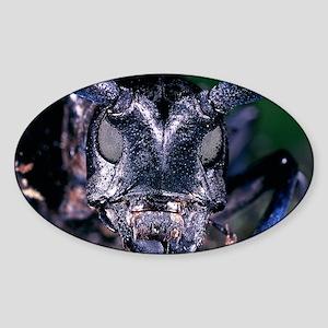asian longhorn beetle face Sticker (Oval)