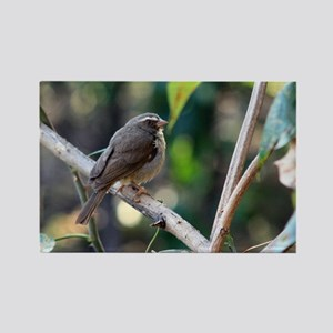 01-Brown-Rumped Seedeater Rectangle Magnet