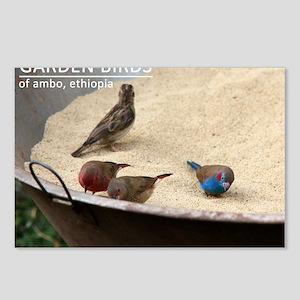 GardenBirds Postcards (Package of 8)