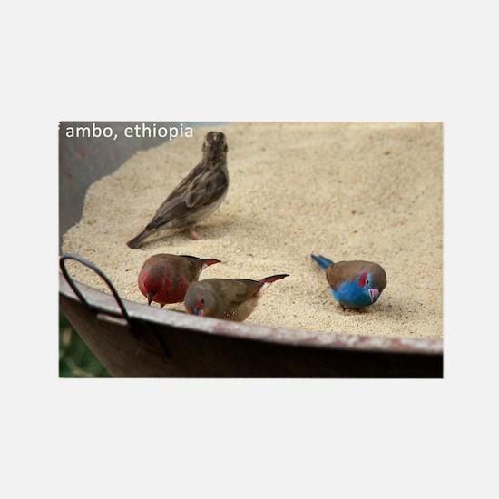 GardenBirds Rectangle Magnet