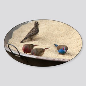 GardenBirds Sticker (Oval)
