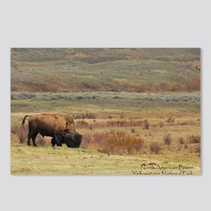 Bison Postcards (Package of 8)