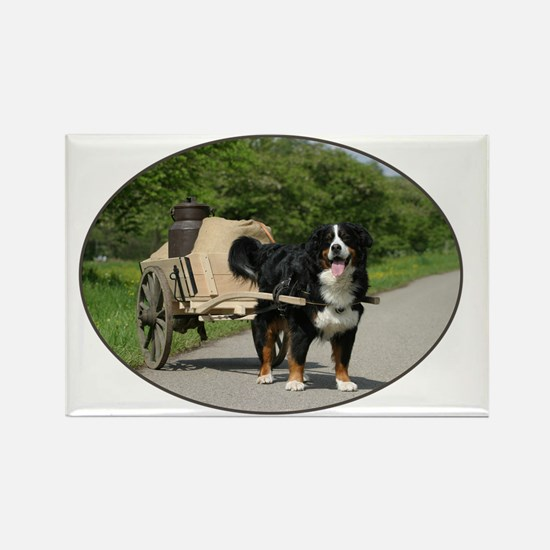 bernese_oval Rectangle Magnet
