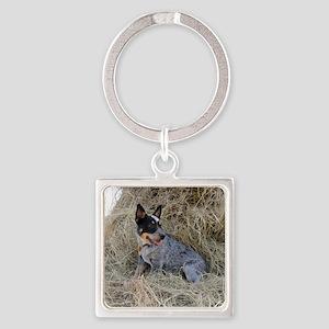 Australian Blue Heeler Pup Square Keychain