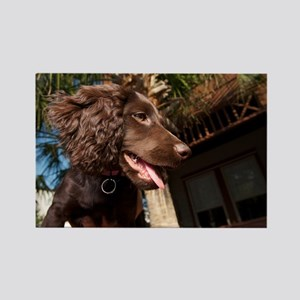 Boykin Spaniel Puppy Rectangle Magnet