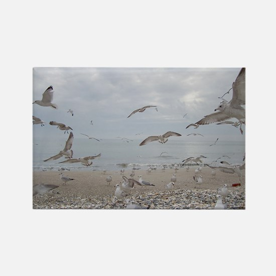 edisto note card gulls Rectangle Magnet
