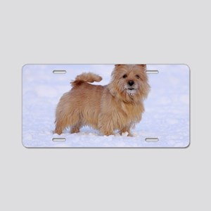 norwich_terrier_1 Aluminum License Plate