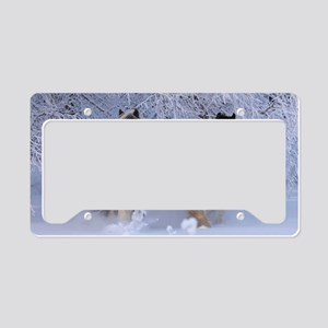 ic_12 License Plate Holder