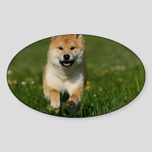 cal_shiba_jan Sticker (Oval)