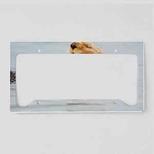385x245_wallpeel_otter_1 License Plate Holder
