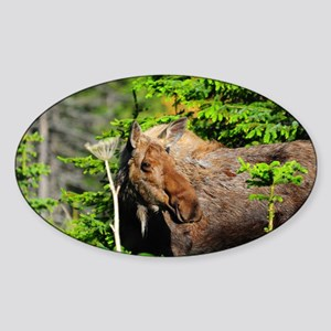 385x245_wallpeel_moose Sticker (Oval)