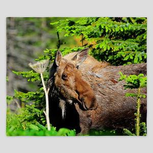 385x245_wallpeel_moose King Duvet