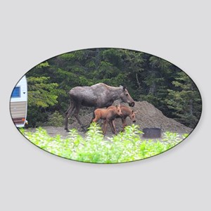 385x245_wallpeel_moose_1 Sticker (Oval)