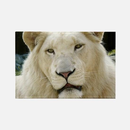 blonde lion travel Rectangle Magnet