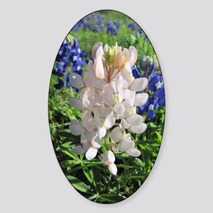 Pink and Bluebonnets Sticker (Oval)